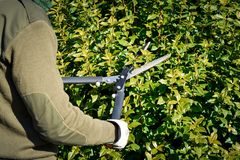 Cutting hedge with scissor, winter pruning royalty free stock images