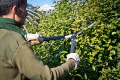 Cutting hedge with scissor, winter pruning stock photos