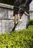 Cutting Hedges with Manual Shears Royalty Free Stock Photo