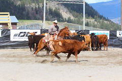 Cutting Horse Show Royalty Free Stock Photos