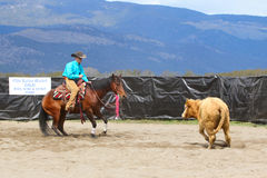 Cutting Horse Show Royalty Free Stock Photography