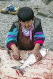 Cutting of just catched salmon on the bank of Anadyr firth, Chukotka Stock Photography