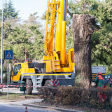 Cutting a large tree in a city. Maintenance of green citizen Royalty Free Stock Photos
