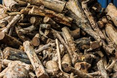 Cutting log use for raw material to feed in factory Royalty Free Stock Photography