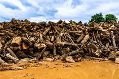 Cutting log use for raw material to feed in factory Stock Images