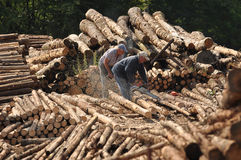 Cutting logs Stock Photography