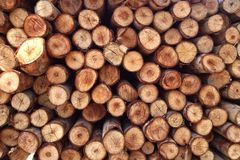 Cutting logs Royalty Free Stock Image