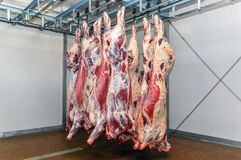 Cutting meat slaughterhouse workers in a meat factory. Cutting meat slaughterhouse workers in a meat factory Royalty Free Stock Images
