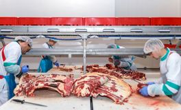 Cutting meat slaughterhouse workers in a meat factory. Cutting meat slaughterhouse workers in a meat factory Stock Images