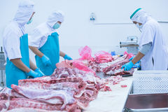 Cutting meat slaughterhouse workers in the factory. Cutting meat slaughterhouse workers in the refrigerator Stock Image