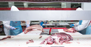 Cutting meat slaughterhouse workers in a meat factory. Cutting meat slaughterhouse workers in a meat factory stock photo