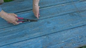 Cutting metal net with scissors on garden table. In farm stock footage