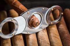 Cutting off cigar tip on cigars pile Stock Photo