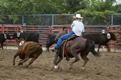 Cutting out Calf Number Four Panning and Motion Blur Stock Photos