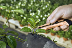 Cutting plant Stock Photos