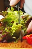 Cutting salad Royalty Free Stock Photography
