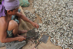 Cutting Small Fishes Stock Images