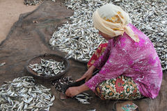 Cutting Small Fishes Stock Image