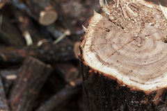 Cutting and Storing Firewood Royalty Free Stock Images