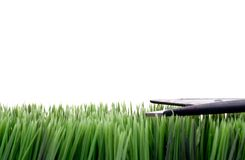 Cutting The Grass With Scissors Stock Photography