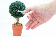 Cutting Topiary Stock Image