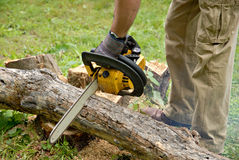 Cutting a Tree Royalty Free Stock Photography
