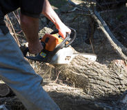 Cutting the tree Royalty Free Stock Image