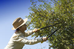 Cutting tree branches and hedge Royalty Free Stock Photos