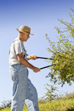 Cutting tree branches and hedge Stock Photography
