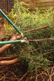 Cutting tree branches A Stock Photo
