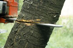 Cutting tree with a chainsaw close up procces. Cutting tree with a chainsaw close up royalty free stock photos