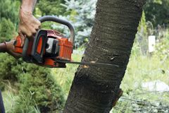Cutting tree with a chainsaw close up procces. Cutting tree with a chainsaw close up stock images