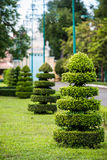 Cutting tree garden decoration at asian temple Royalty Free Stock Photography