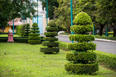 Cutting tree garden decoration at asian temple Stock Photos