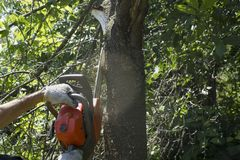 Cutting tree in a garden with an orange chainsaw. Background stock photos