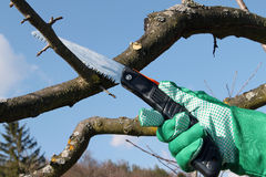 Cutting a tree limb Royalty Free Stock Photography