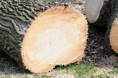 Cutting tree Stock Images