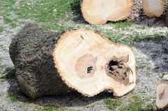 Cutting tree Royalty Free Stock Images