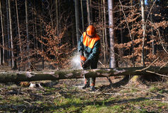 Cutting tree in pieces, woodcutter Royalty Free Stock Photo