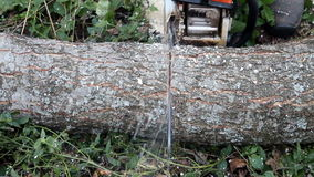 Cutting the tree trunk Chainsaw stock video footage