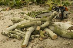 Cutting tree trunks. Trunks piled up after autumn pruning Royalty Free Stock Image