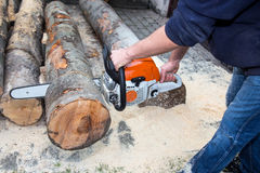 Cutting the tree Stock Photo