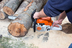 Cutting the tree Royalty Free Stock Photos