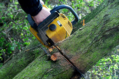 Cutting trees with chainsaw Royalty Free Stock Photos