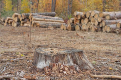 Cutting of trees Royalty Free Stock Photo
