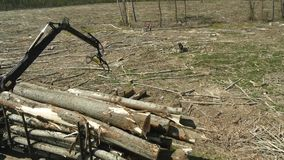 Cutting trees in the forest stock footage