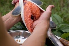 Cutting up fresh-caught salmon Stock Photos