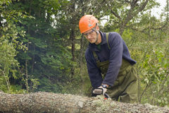 Cutting up tree. Cutting up a fallen tree with a chainsaw stock photo