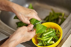 Cutting vegetable. Cutting vegetabble, chinese green cabbage Stock Image
