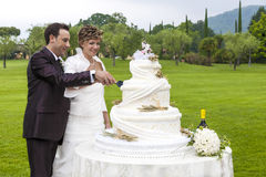 Cutting a wedding cake. Bride and groom cutting wedding cake Royalty Free Stock Photography